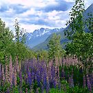 Lupins and Mountains by Jann Ashworth