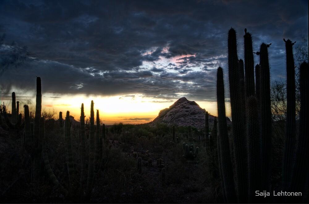 A Desert Sunset  by Saija  Lehtonen