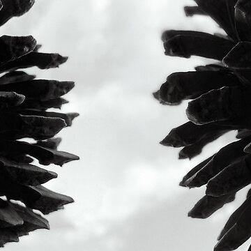 Pine Cones by StudioDavis