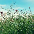 Field Wild Flowers by Richard Davis