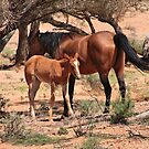 Mother and foal. Outback, Australia by Fineli
