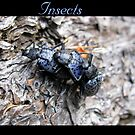 Insects by Kimberly Chadwick