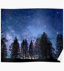 Beautiful Starry Evening with Pine Tree Silhouettes Poster