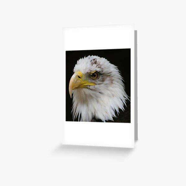 Bald Eagle Head Greeting Card
