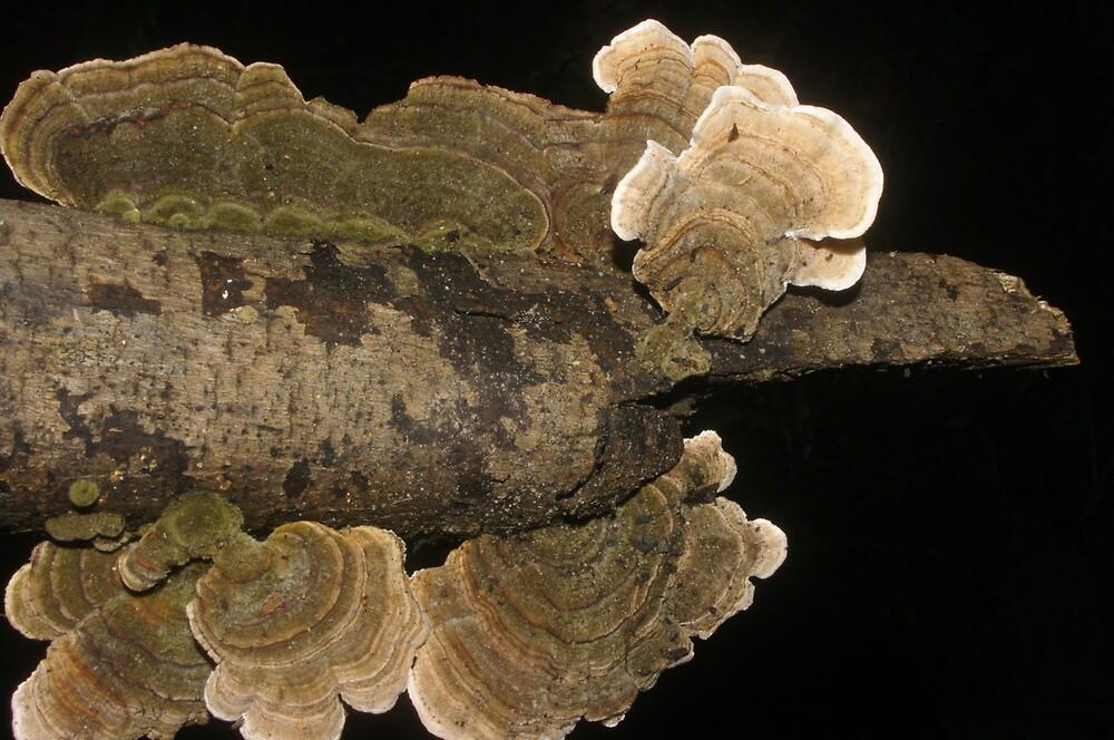 Polypores by yeuxdechat