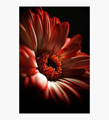 A Floral Red Head Photographic Print