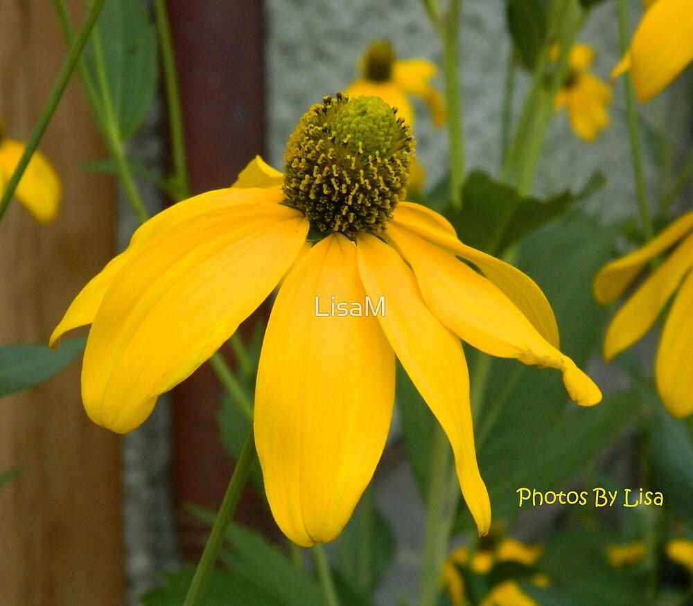 Yellower Daisy by LisaM