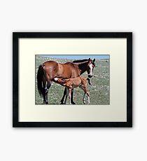 Stallion Colt Nurses Framed Print