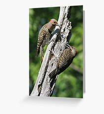 Flickers Greeting Card