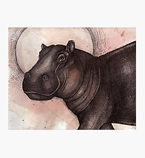Smile (the Hippo) Photographic Print