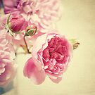 Old roses by lorrainem