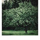 tree  by Andraž Jenkole