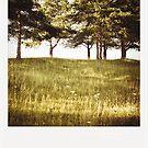 trees by Andraž Jenkole