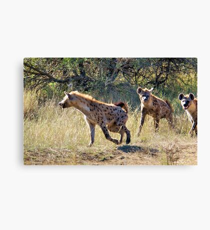 HYAENA ON THE HUNT - Spotted Hyaena - Crocuta crocuta Canvas Print