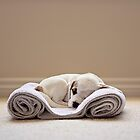 Portrait of a sleeping puppy by Renee Dawson