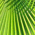 Palm Shadow - 5 by Susana Weber