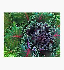 Naples Kale Photographic Print