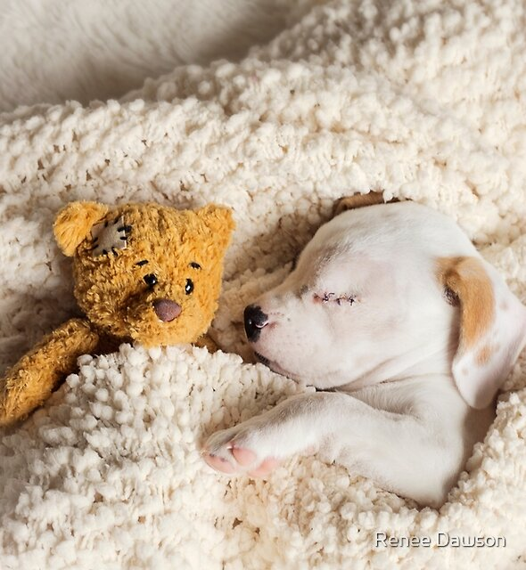 Daisy & Patches by Renee Dawson