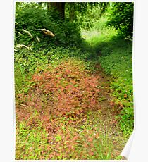 Fragrant Pathway Through the Forest Poster