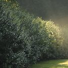 Light Shower on the Hedgerow by Kelly Chiara