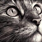 Cat's face - scratchboard art by Elena Kolotusha