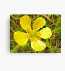 Mellow yellow in Donegal Canvas Print