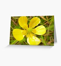 Mellow yellow in Donegal Greeting Card