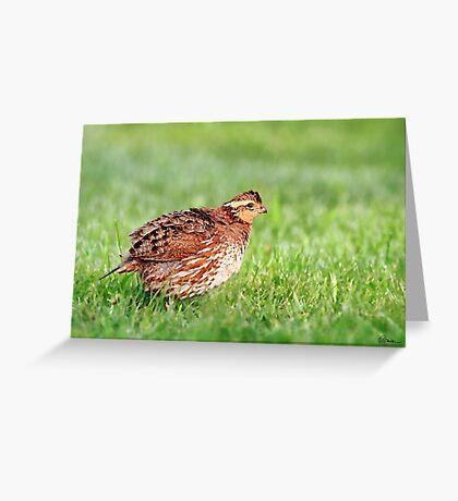 Northern Bobwhite - Female Greeting Card
