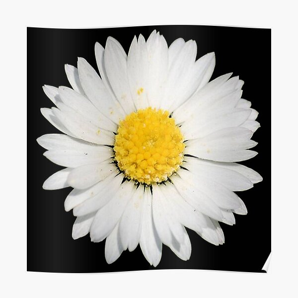 Plethora of Colourful Flowers Framed Print Picture Poster Floral Rose Daisy