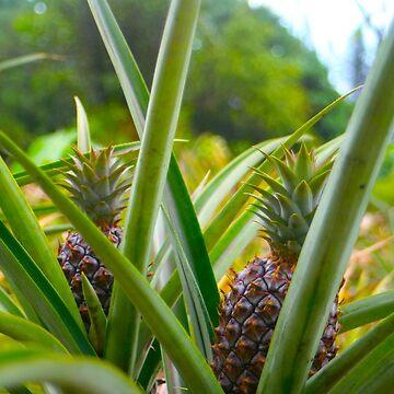 Pineapples by emxacloud
