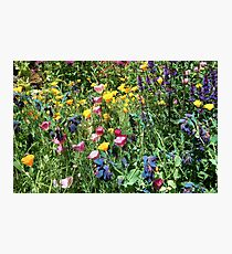 Rainbow of Colors Photographic Print