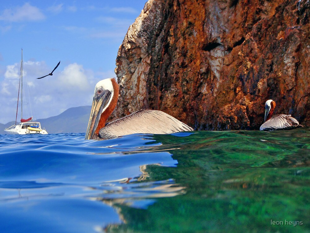 Pelicans at the Caves by Leon Heyns