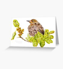 Juvenile Blackbird  28 11. 2010 Greeting Card