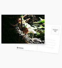 New Zealand Cave Weta 02 Postcards