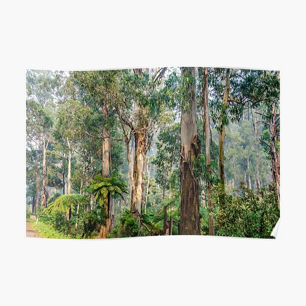A view of the Dandenong Ranges Poster