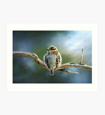 English-House Sparrow Art Print