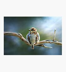 English-House Sparrow Photographic Print