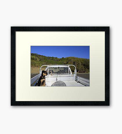 Dog In Ute Framed Print