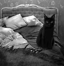 Cat BW by Louise Fahy