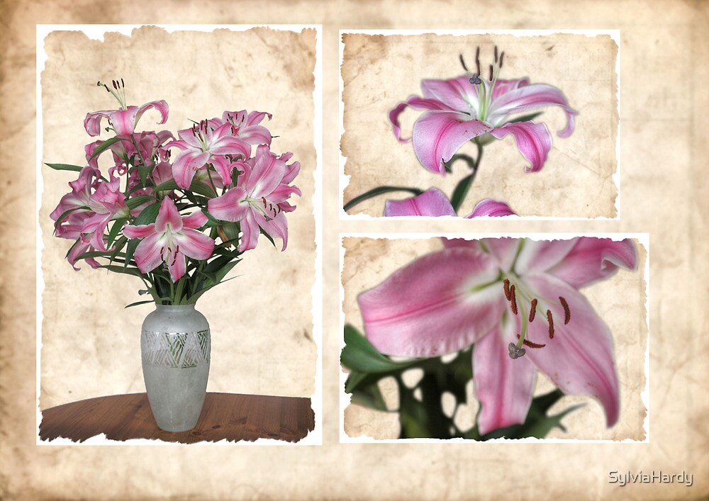 Mark and Rachel's Lillies by SylviaHardy