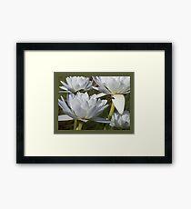 Bee-po-lil-nated Framed Print