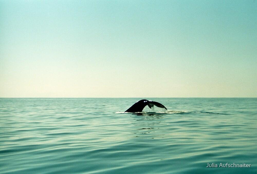 Whale by Julia Aufschnaiter