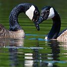 I Heart You by Randall Ingalls