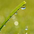 Hanging Dew by relayer51