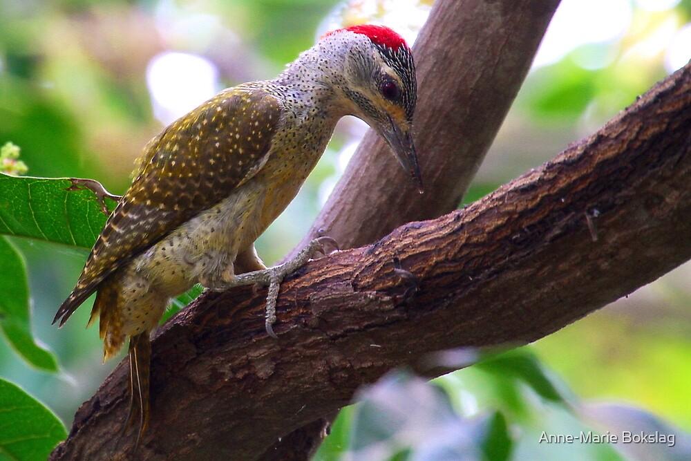 Grey Woodpecker by Anne-Marie Bokslag