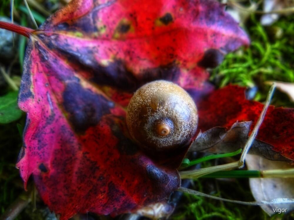 Little acorn by vigor