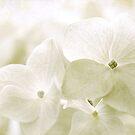 Taupe Hydrangea by Beth Mason