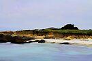 "On the Monterey Coast by Christine ""Xine"" Segalas"
