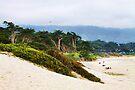"Carmel Beach by Christine ""Xine"" Segalas"