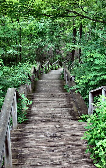 Stairway to the Forest by Sheri Nye